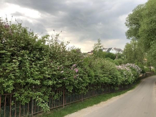 Зелень в Москве